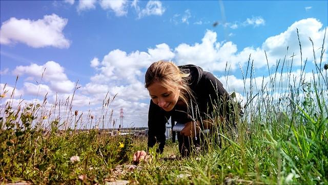 Frau untersucht Pflanzen auf einer Wiese.