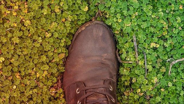 Schuh auf grünen Pflanzen