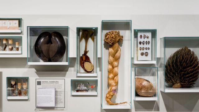 Das Foto zeigt Sammlungsobjekte des Loki Schmidt Hauses.
