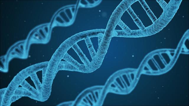 Das Foto zeigt einen DNA-Strang.