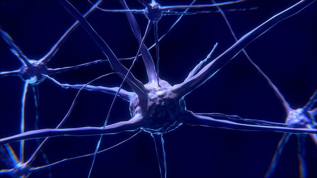 Das Foto zeigt Nervenzellen.