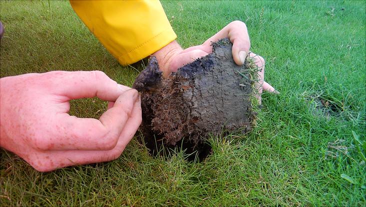 Nach 90 Tagen werden die Teebeutel wieder ausgegraben.