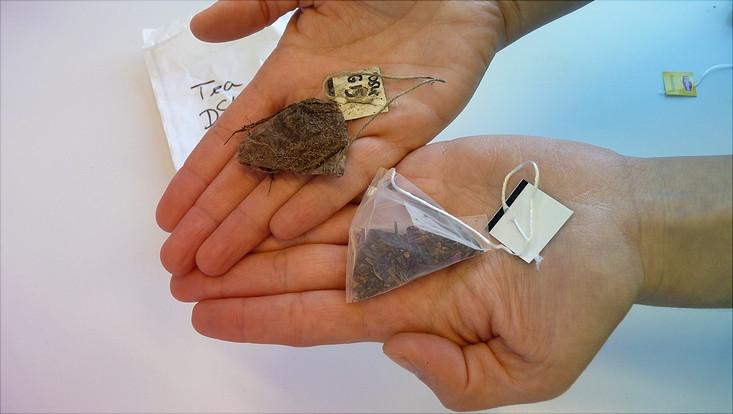 Nach dem Ausgraben wird der Teebeutel getrocknet und gewogen (links). Der Wert wird mit dem Gewicht eines Original-Teebeutels (rechts) verglichen.