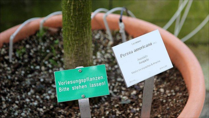 Schild Vorlesungspflanzen bitte stehen lassen