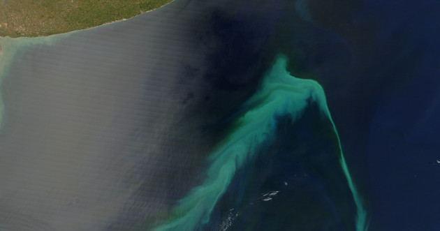 Phytoplankton bloom in front of the Argentinian coast.