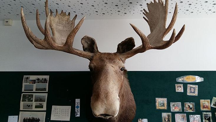 moosepicture