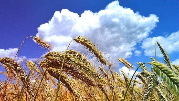 Acker, Wolken, Landwirtschaft