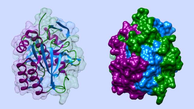 Modelle von Proteinmoleküle
