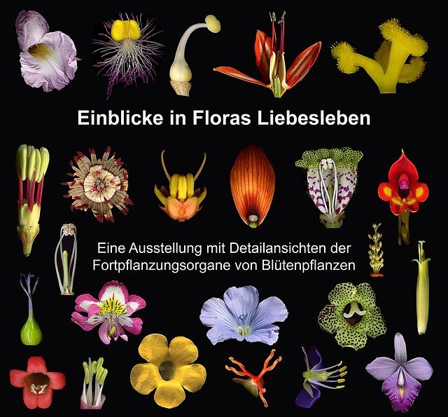 floras liebesleben