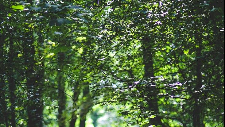 Wald mit Laubblättern