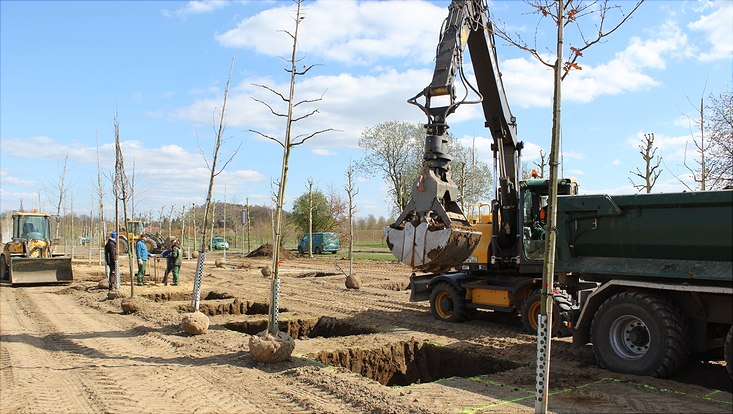 Pflanzung vom Bäumen im rahmen des Baumprojektes Bobast