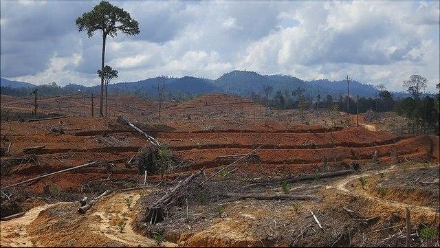 Regenwald Indonesien, abgeholzt