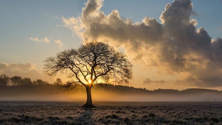 Baum. Symbolisch für Bäume, Wald und Klimawandel.
