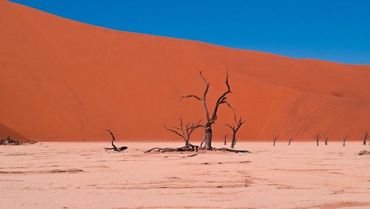 Vertrockneter Baum in Dürre. Symbolisch für Kriege, Krisen und Konflikte.