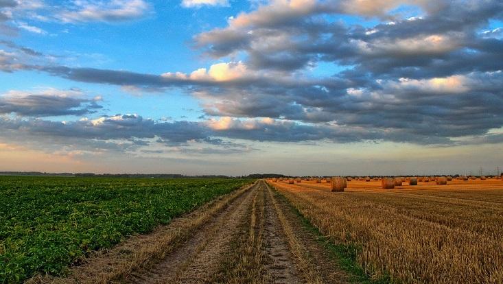 Auf der linken Seite grüne Wiesen, auf der rechten Seite ein Getreide-Feld. In der Mitte ist ein Weg.