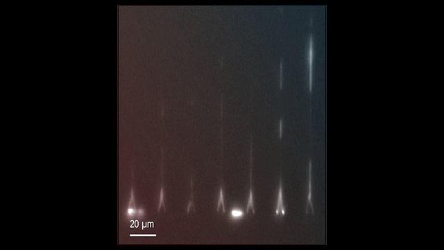 Darstellung zeigt das optische Mapping der DNA.
