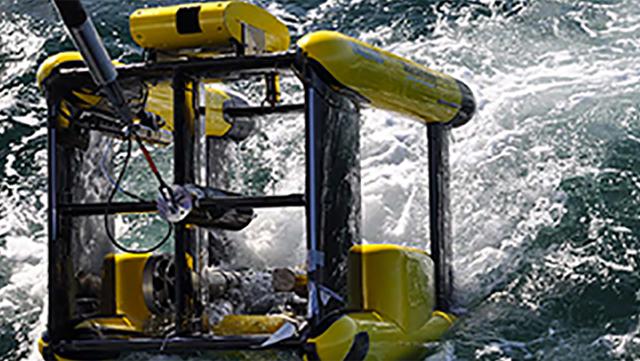 Logo Bachelor Marine Ökosystem und Fischereiwissenschaften