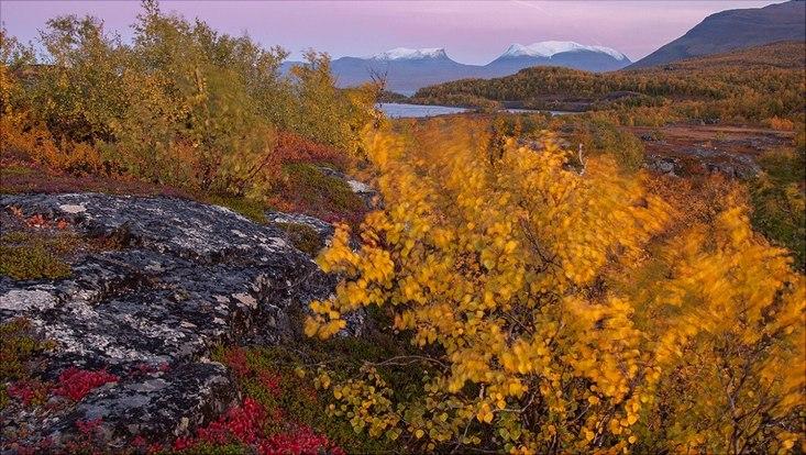 Landschaft, Steine, Bäume mit gelben und roten Blätterns