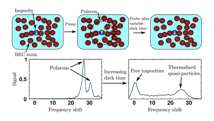 The top row figures provide a schematic description of the proposed pump-probe spectroscopy scheme. The lower left figure demonstrates a typical spectrum for small dark times, where sharp peaks at a positive frequency shift emerge, capturing the pres