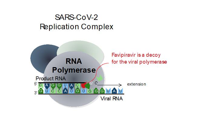 SARS-CoV2-ReplicationComplex