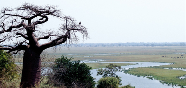 Flussdelta Okavango