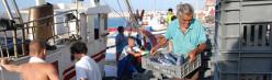 Teaser Marine Ökosystemdienstleistungen