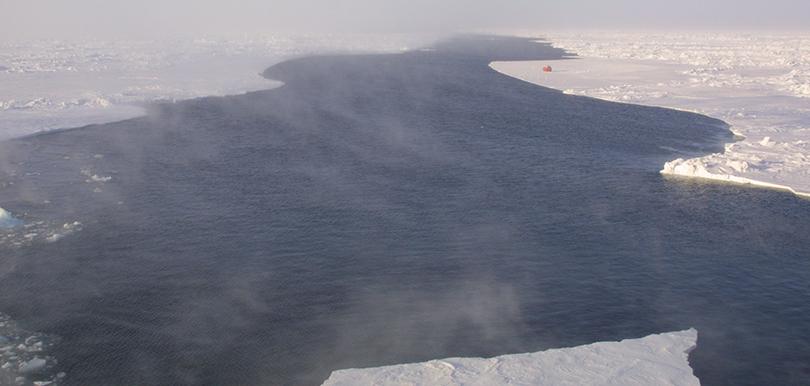 rinne arktis