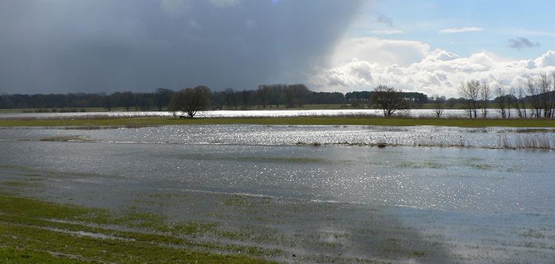 Hochwasser Mittelelbe