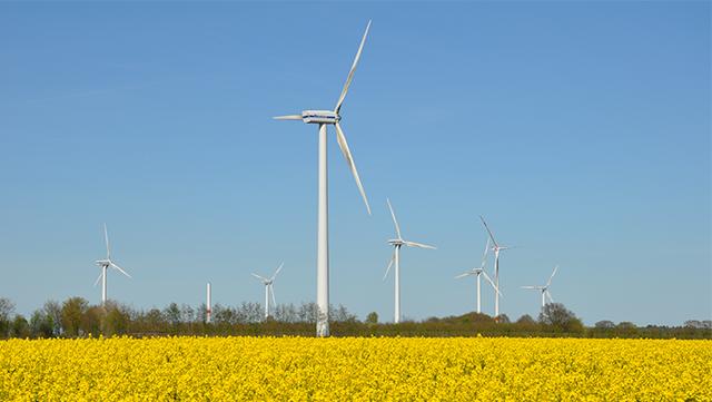Windräder auf Rapsfeld