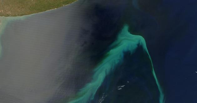 Phytoplanktonblüte vor der Küste Argentinies.