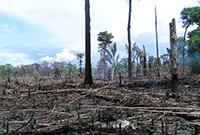 Waldvernichtung