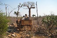 Holzkarren in Madagaskar