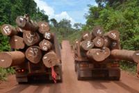 Holztransport auf Lastwagen