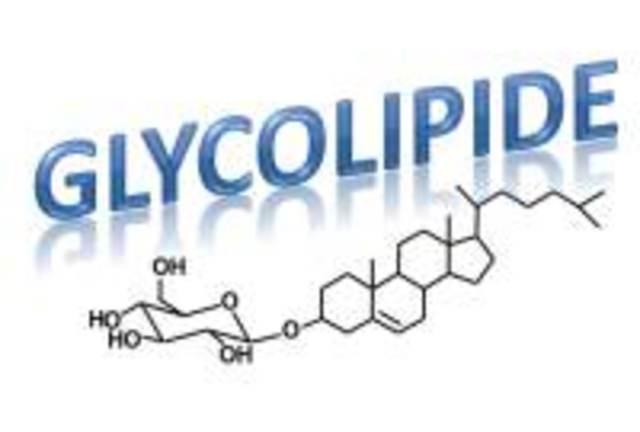 Glykolipide