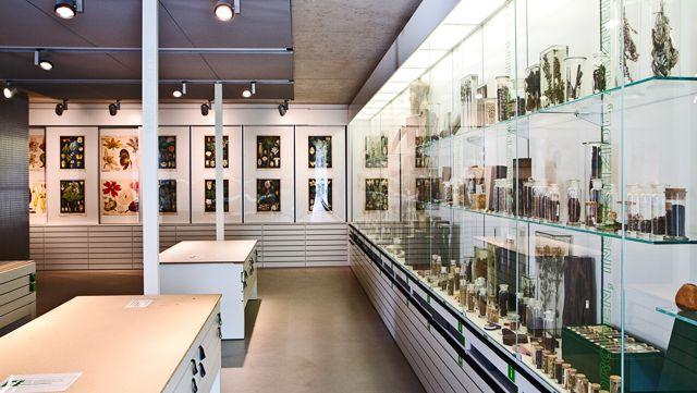 Ausstellung des Loki Schmidt Haus