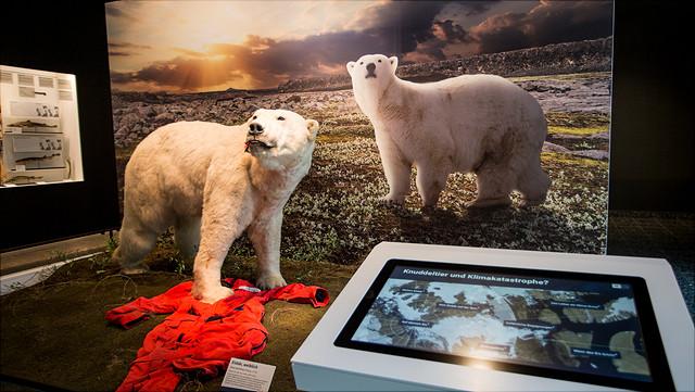 Zoologisches Museum Eisbären