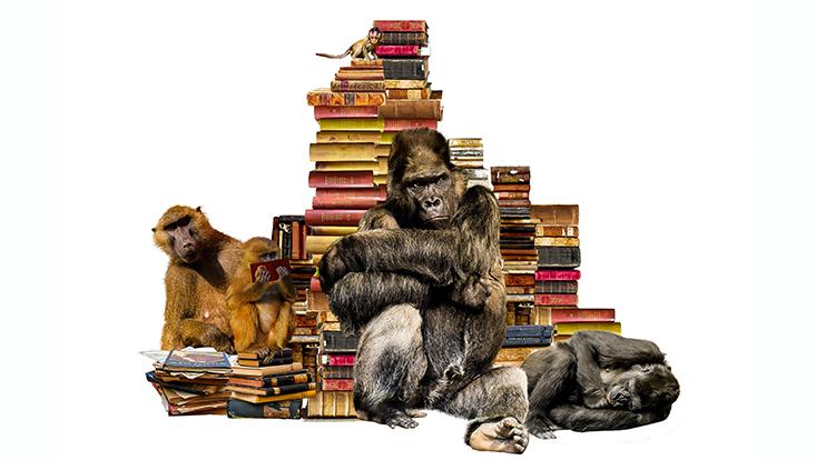 Bücherstabel, vor den Affen und Gorilla sitzen
