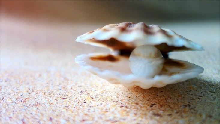 Muschel mit Perle am Strand