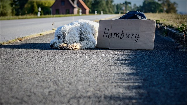 """Ein Hund liegt am Straßenrand, neben ihm ein Rucksack und ein Pappschild mit der Aufschrift """"Hamburg"""""""