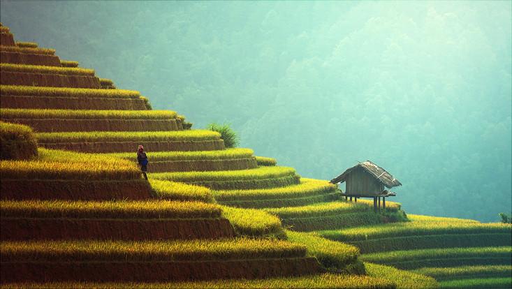 Terassenförmig angelegte Reisfelder