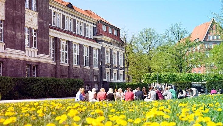 Studierende sitzen auf blühender Campus-Wiese