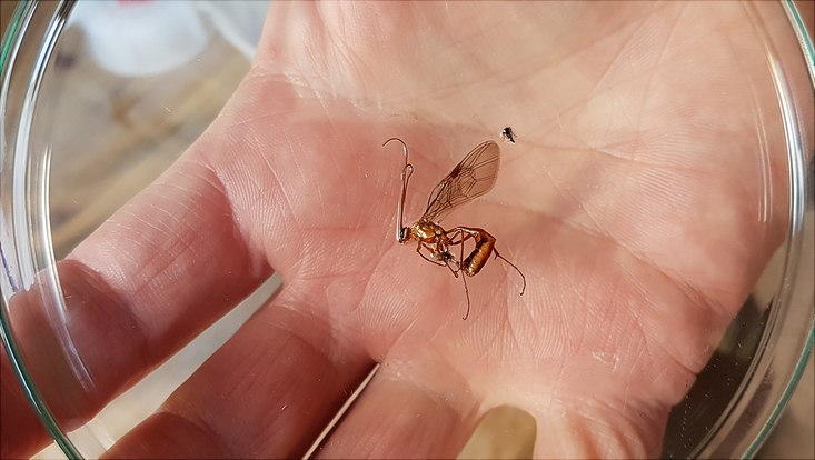 Insektenmoitoring auf dem Energieberg