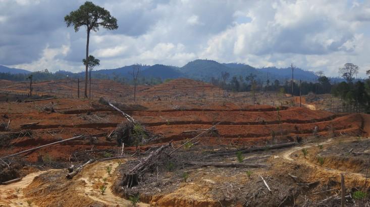 Ölpalmenplantage in Indonesien