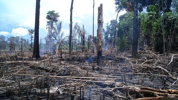 Gerodeter Wald in Brasilien