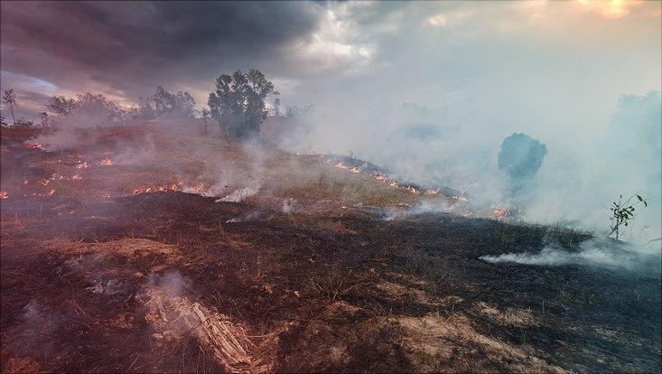 Verbrannter Wald in Australien