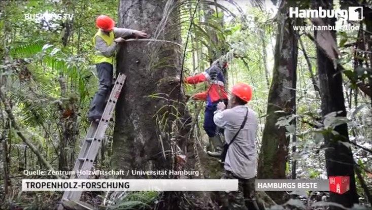 Tropenholzforschung. Mehrere Menschen mit roten Helmen stehen um einen Baum. Einer misst seinen Umfang.
