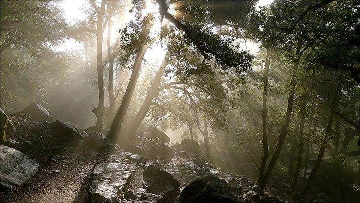 Wälder gehören zu den wichtigsten Ökosystemen weltweit