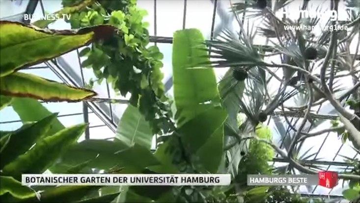 Pflanzen in einem Gewächshaus