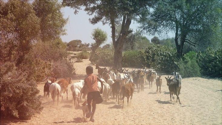Ziegenherde Madagaskar