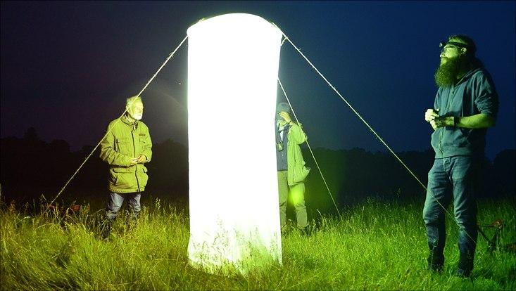 Beobachtung nachtaktiver Insekten im Schnaakenmoor